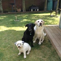 3 dogs google