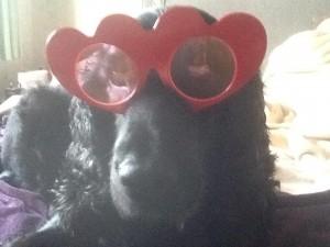 Bruno in glasses