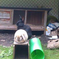 cath bunnies